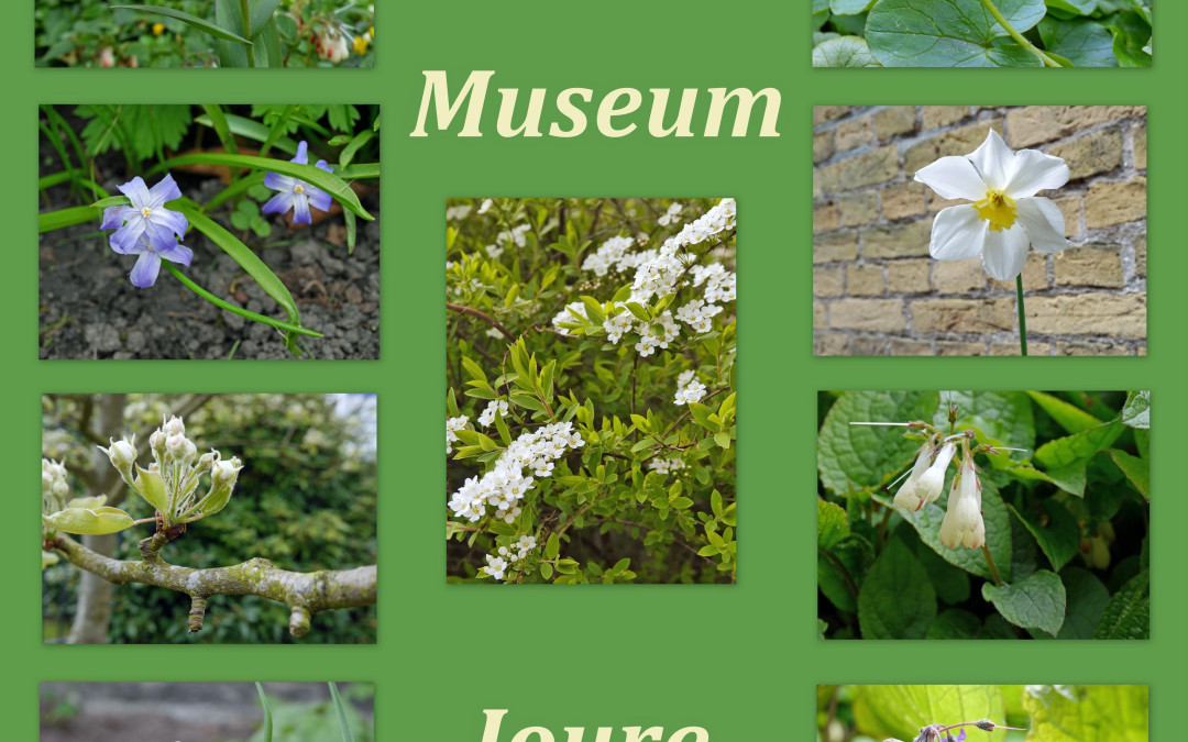 Tuin Museum Joure in volle bloei