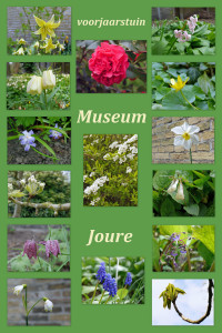 voorjaarstuin 2015 Museum Joure