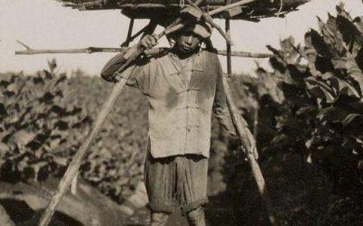 De wondere wereld van de tabakscultuur op Sumatra
